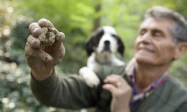White-truffle-hunting-in--001